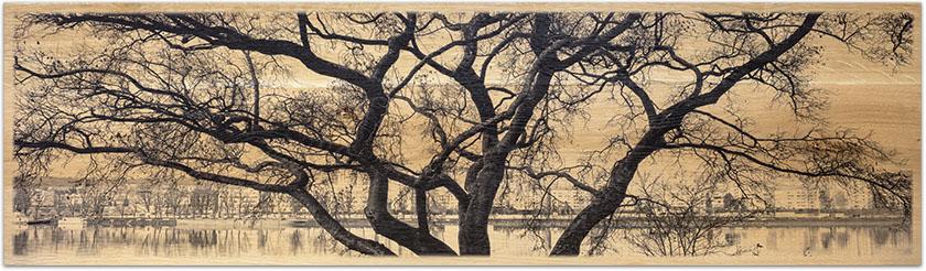 Fotodruck auf Eichenholz