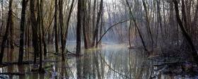 Überschwemmung Donau-Au
