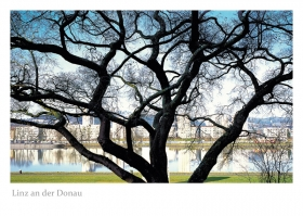 Linz an der Donau - Baum an der Donaulände